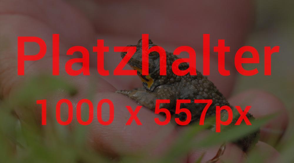 platzhalter3-1
